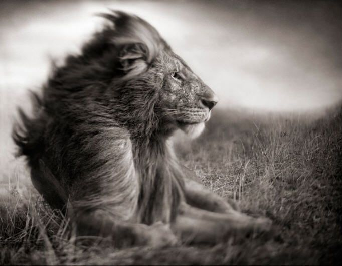 Beautiful black and white images of east african wildlife by the renowned fine art photographer nick brandt