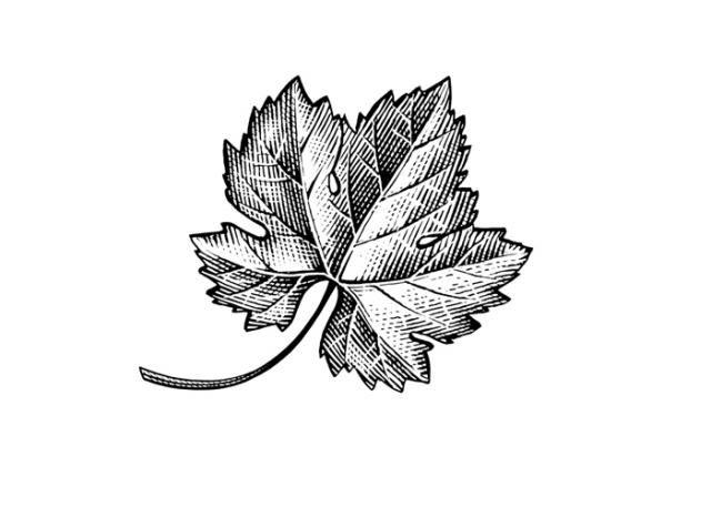 Grape Leaf Icon Grape Drawing Icon Tattoo Wine Tattoo