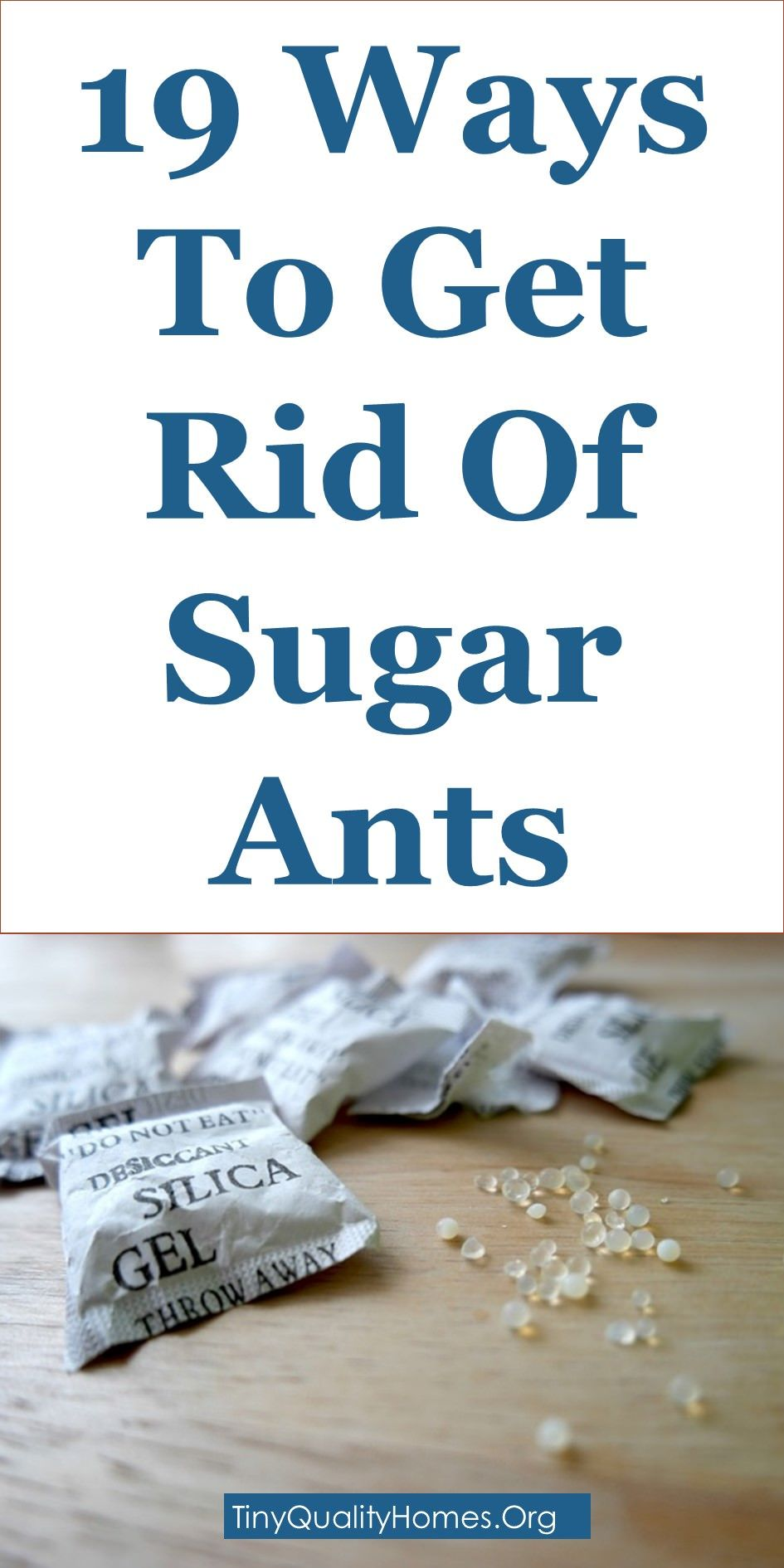 19 Ways To Get Rid Of Sugar Ants Naturally | Home Remedies ...