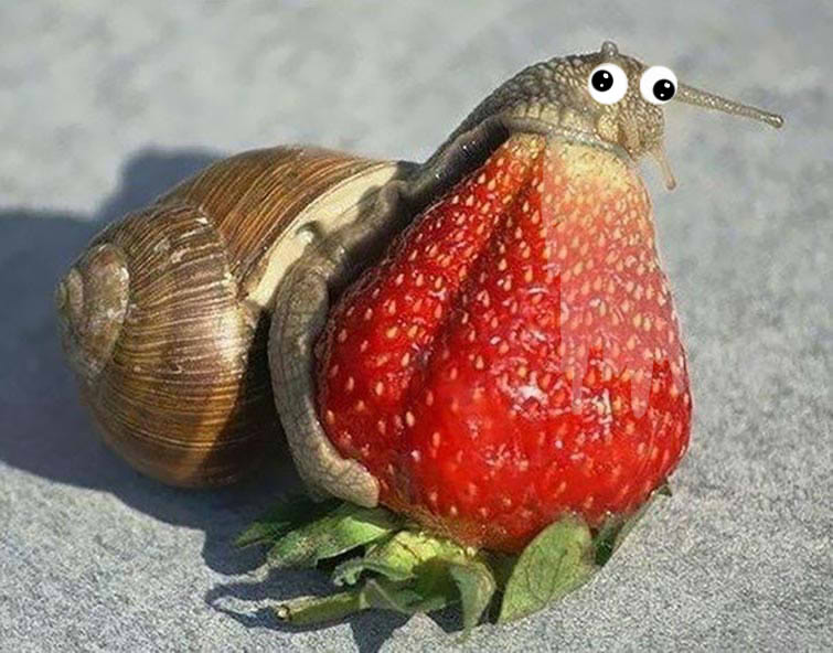 84 Funny Photos Of Animals Eating That Will Make You Laugh