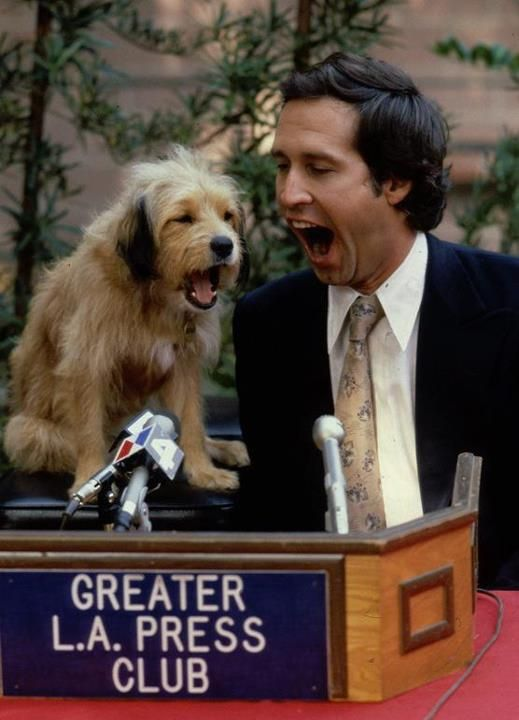 Benji And Chevy Chase Celebrity Dogs Dog Movies Man And Dog