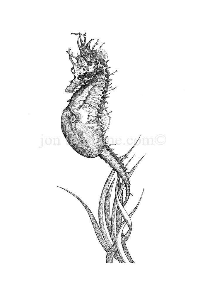 Portrait Ltd Seahorse