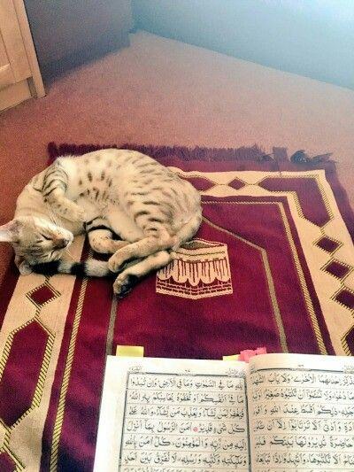 Kucing Dalam Al Quran : kucing, dalam, quran, @notgivinmyname, Hewan,, Kucing, Lucu,, Gambar