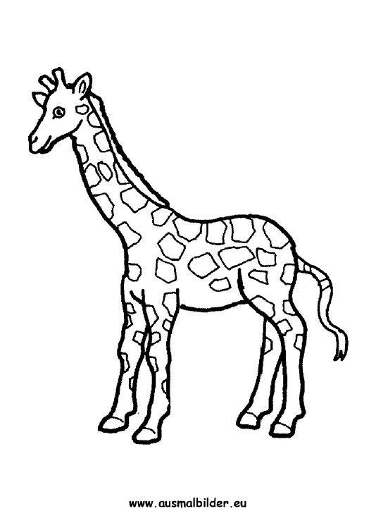 Ausmalbilder Giraffe Gratis 1039 Malvorlage Giraffe Ausmalbilder ...