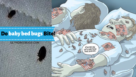 Baby Bed Bugs Answers To Your Questions Bed bug bites