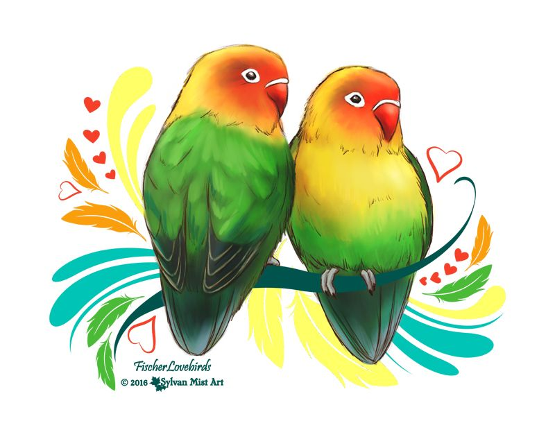Colorful Fischer Lovebirds Parrot Artwork Paintings And Drawings