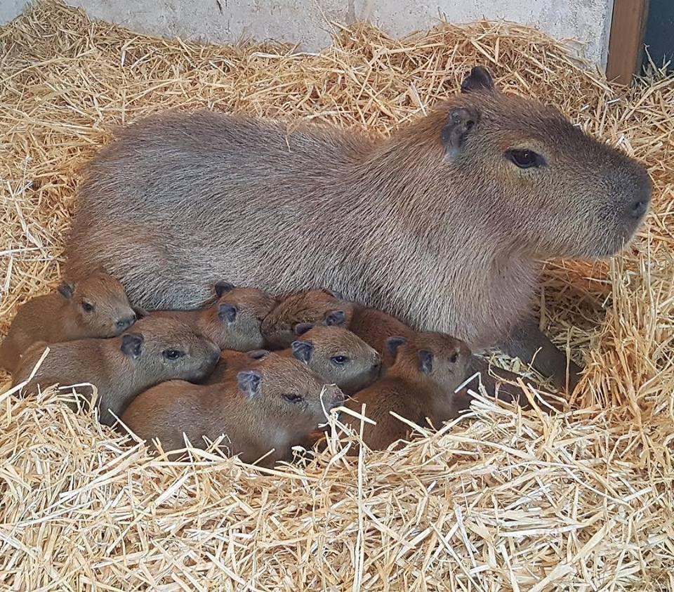 Pin On Cute Li L Rodents