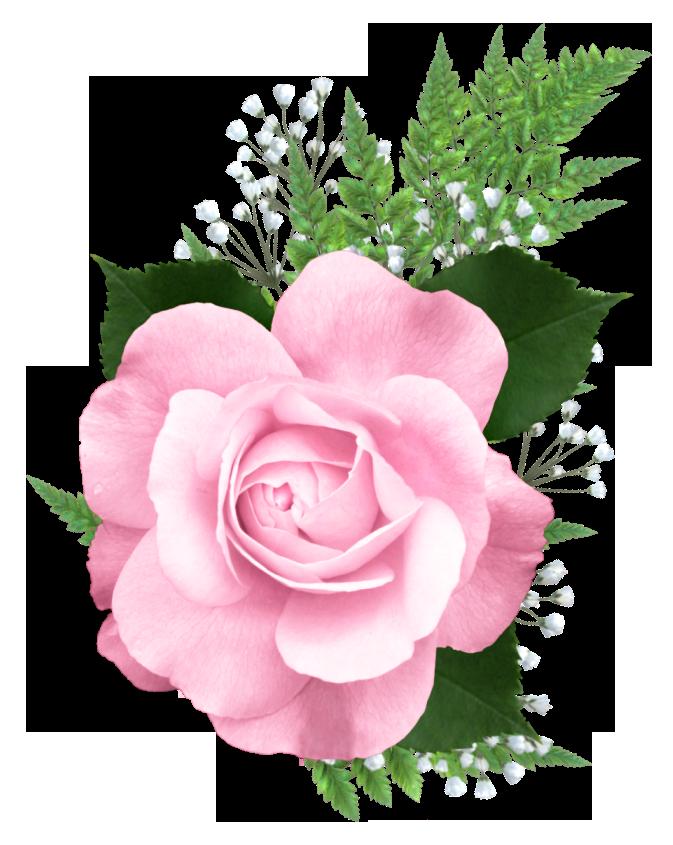 Pink Rose Png Transparent Picture Rosa Cor De Rosa Clipart De Flores Arte Flor