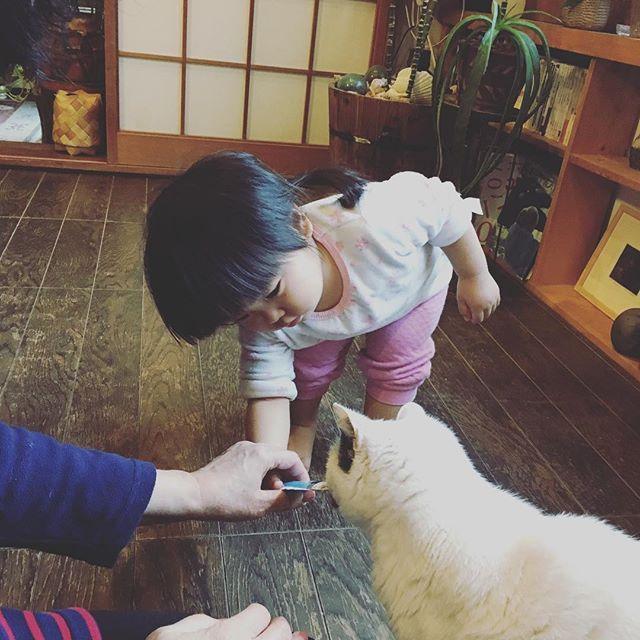 くーちゃんにチュールを くーちゃんは最近寝床からあまりでてこない #愛猫#22歳#はちわれ#赤ちゃん#女の子#2月生まれ#1歳9ヶ月 #冬生まれ#親バカ#新米ママ#育児#ムスメ#コドモノ#ママリ#ig_kids#ig_kidsphoto#japan#baby#girl