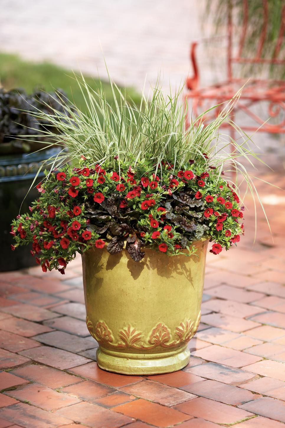 Dress up your pots with eye-catching ornamental grasses.