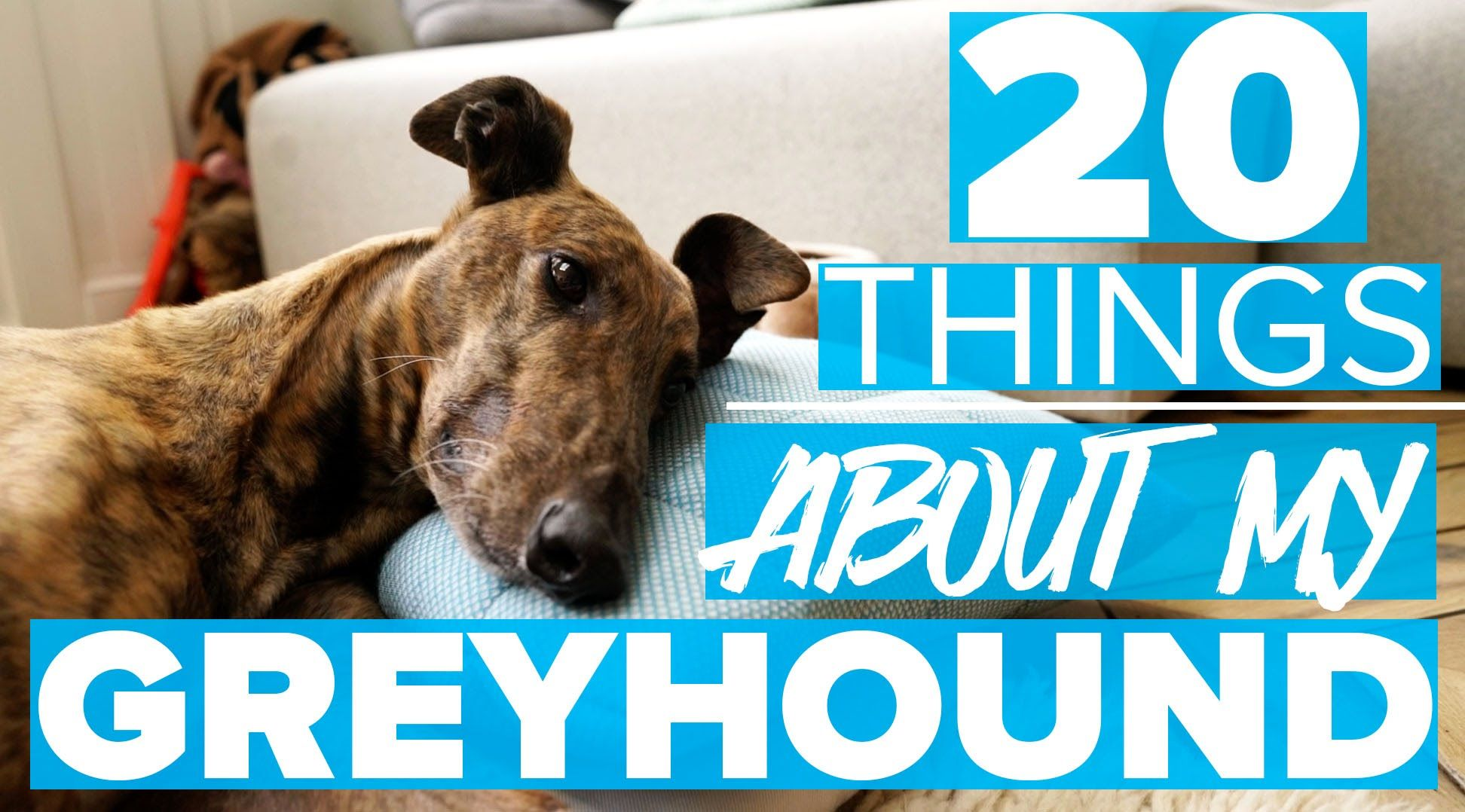 20 THINGS I LOVE ABOUT MY GREYHOUND Estée Lalonde