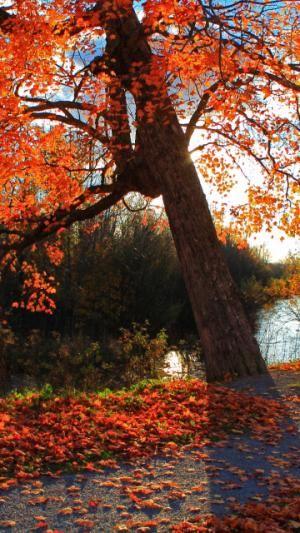 Autumn Landscape Shop Park River Automne Telecharger Le Fond D Ecran 1080x1920 Telephones Mobiles Apple Iphone 6 Plus Fond Ecran Apple Iphone 6 Ecran