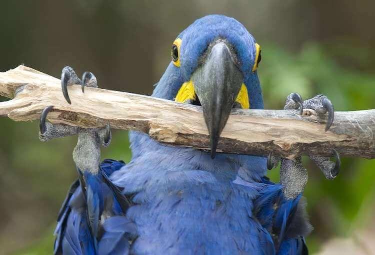 450 Bird Names The A Z Of Best Names For Birds My Pet S Name Pet Birds Bird Breeds Pantanal