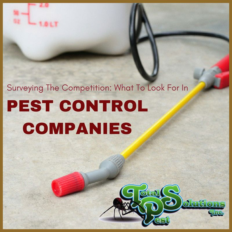 Surveying The Competition: What To Look For In Pest Control Companies