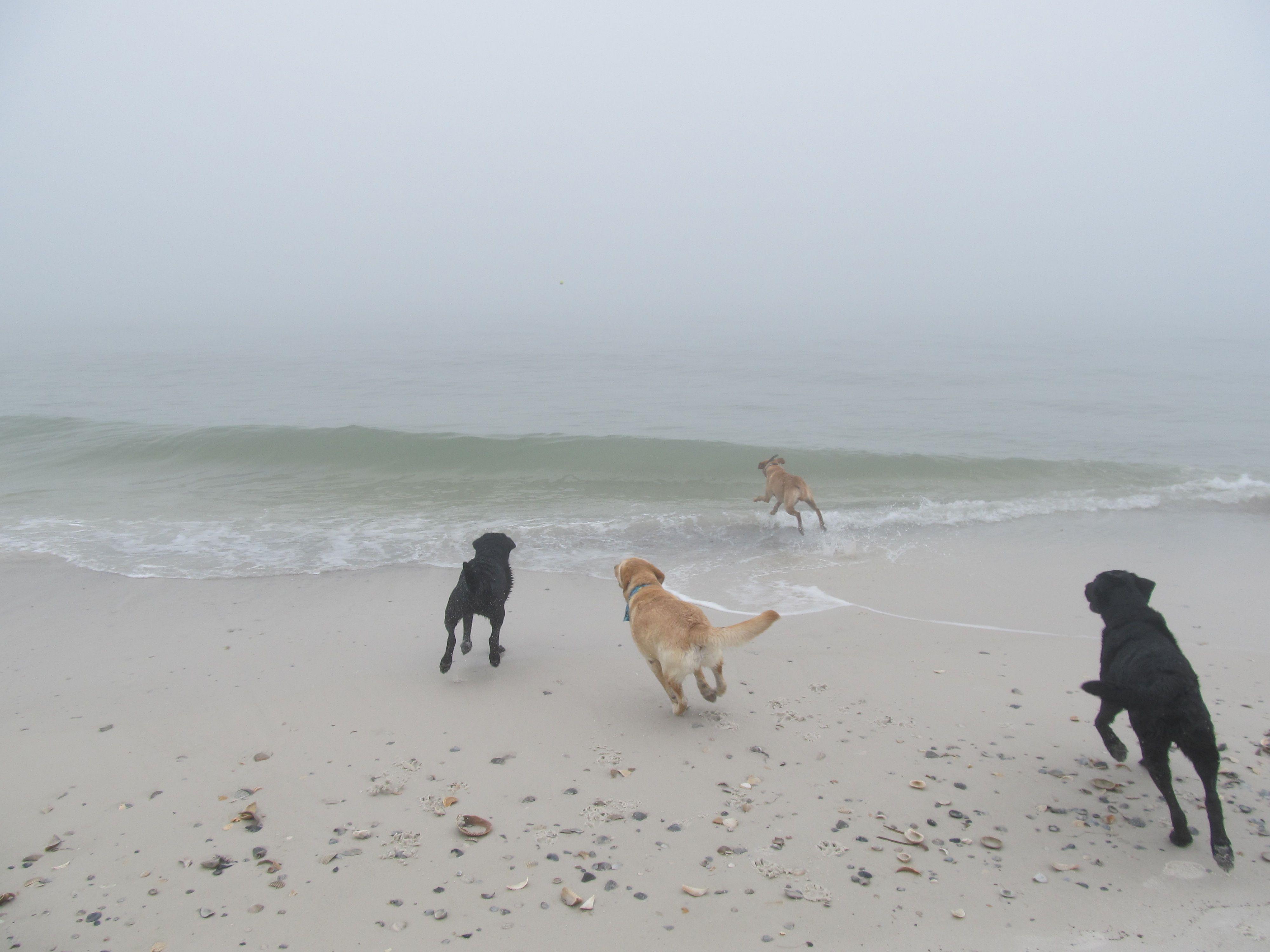 Cape San Blas Pet Friendly Beach Dog Beach Dog Friendly Beach