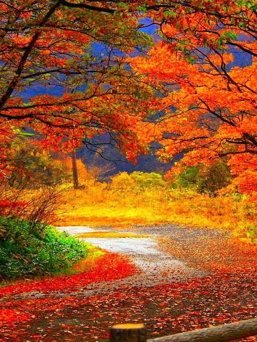 Natural color beauty #autumnscenery