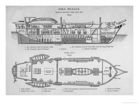 Hms Beagle Charles Darwin S Research Ship With Images Hms