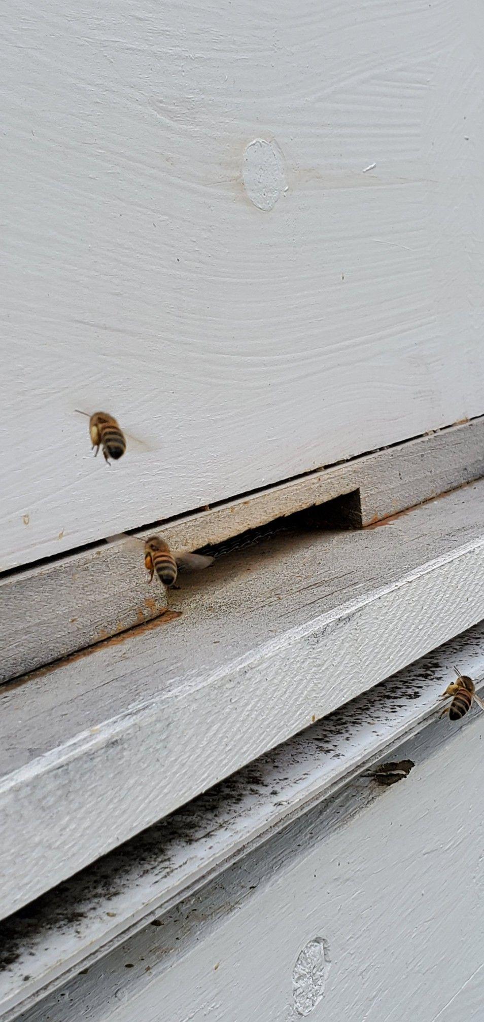 Pin On Beekeeping