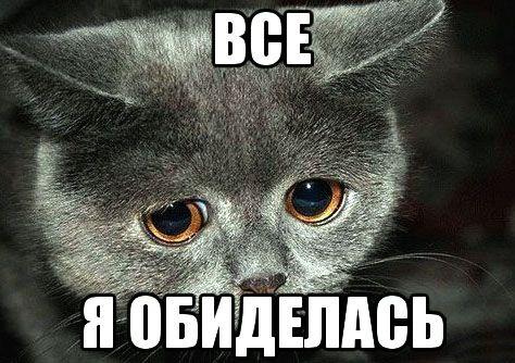 Прикольные картинки - Я обиделась!   Кошачьи мемы, Смешные ...