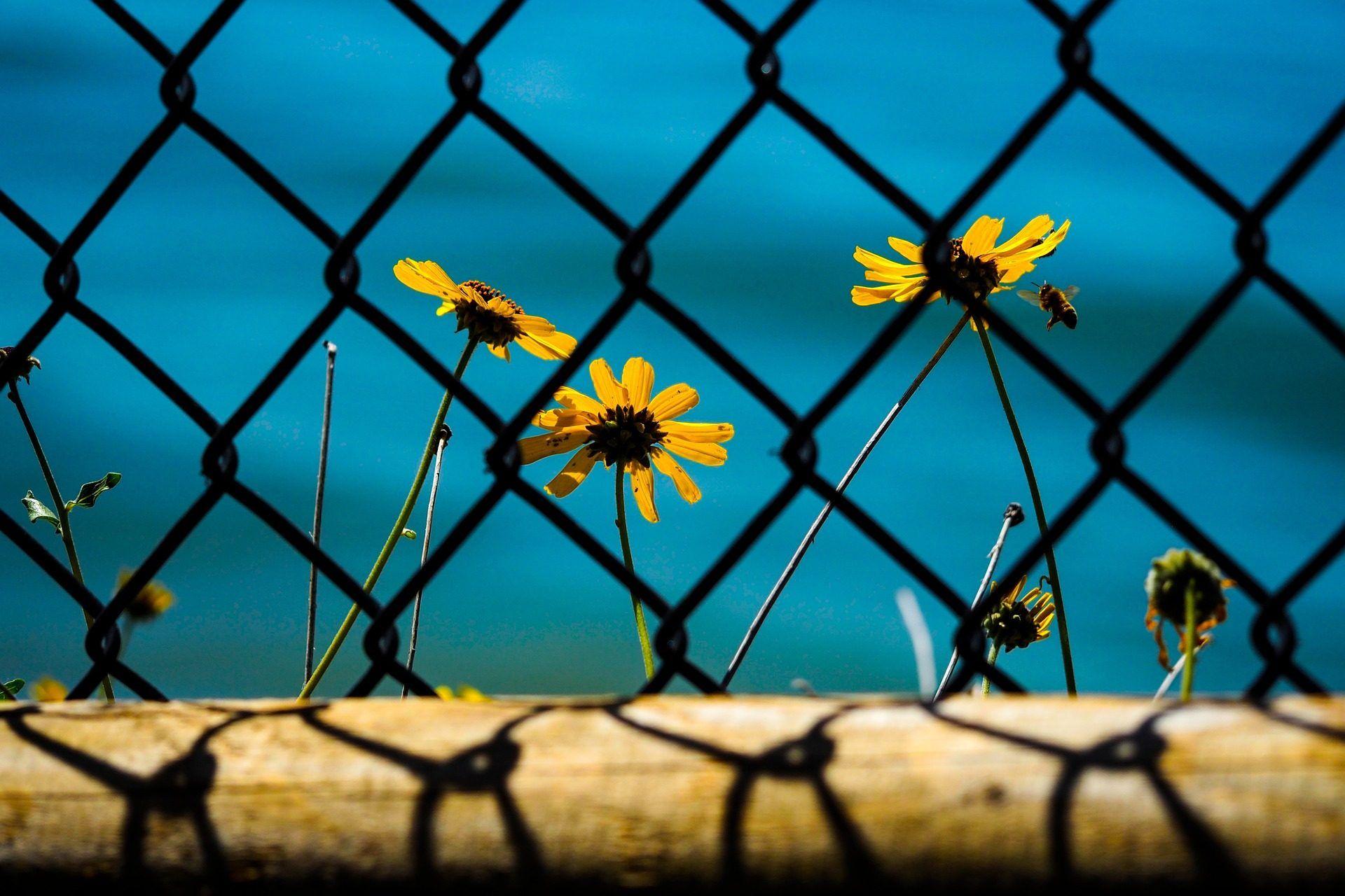 Fondo Escritorio Flores Girasoles