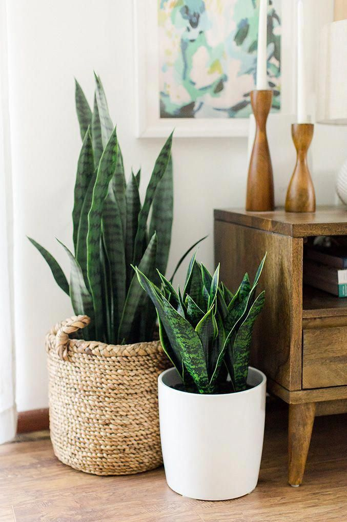 Photo of Large Mid Century Modern Planter, Plant Stand, Plant Pot with Wood Stand- 12″ Ceramic Pot