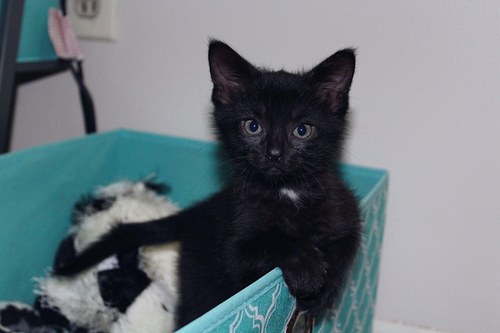 Allerpet Cat Dander Remover 12 Oz Bottle Chewy Com Cat Allergies Cat Dander Sleeping Kitten