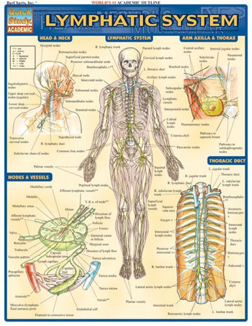 Lower Extremity Anatomy Parts And Functions Manual Guide