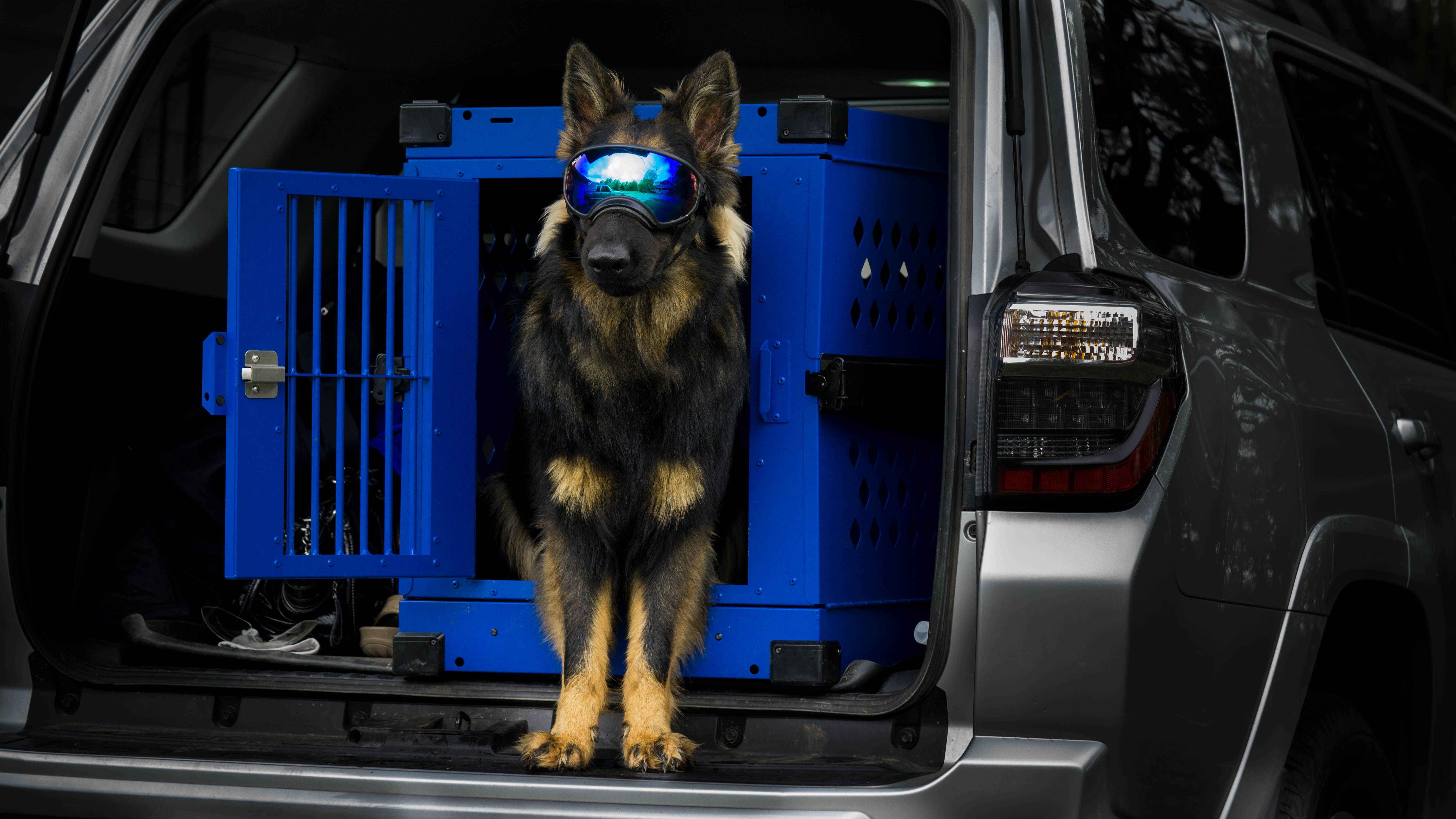Collapsible Impact Dog Crate In The Back Of An Suv Puppylove Puppy Puppygram Puppyoftheday Puppylife Puppydog Puppypala Puppy Palace Dog Crate Dog Life