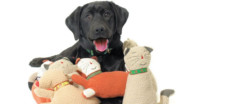 Are You Looking For Dog Toys Online Shopping In India Come At
