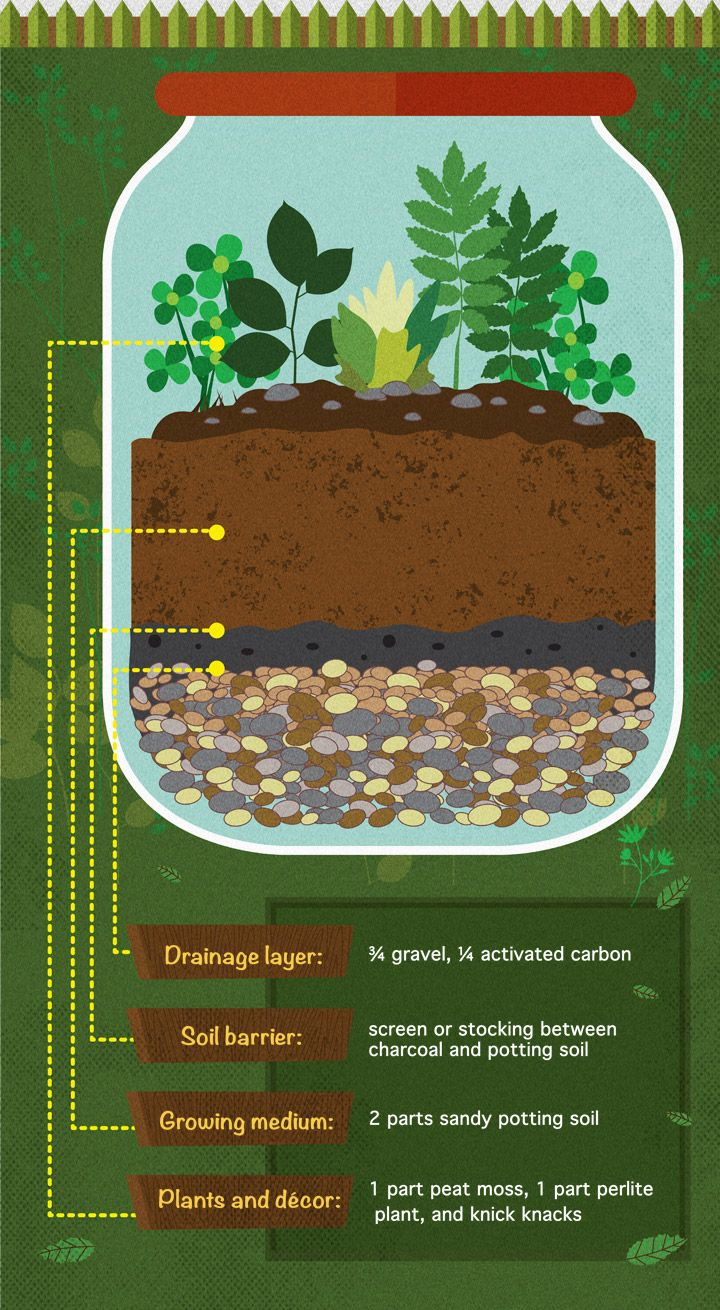 How To Build A Terrarium Layering Materials Share Gardening
