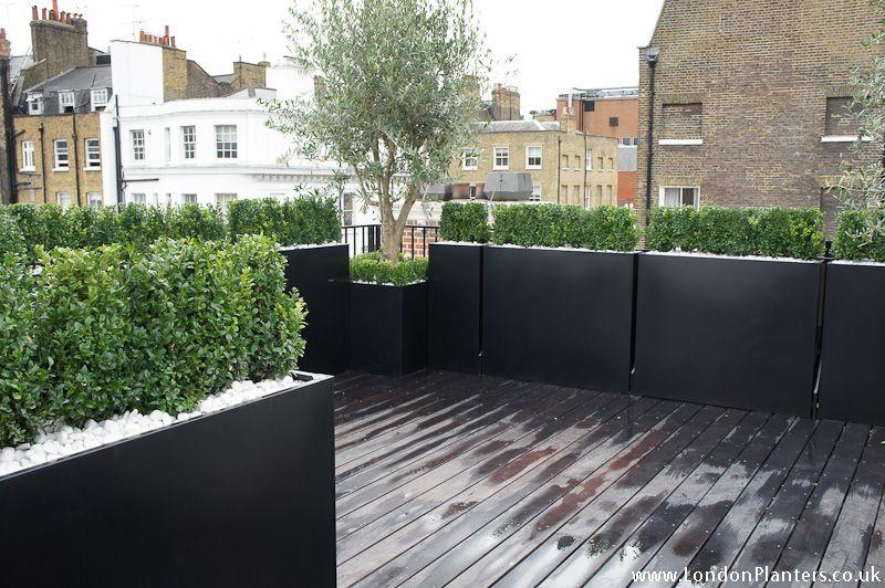 Olive Trees Buxus Hedge Terrace Planters Terrace Garden Design Balcony Planters Roof Terrace Design