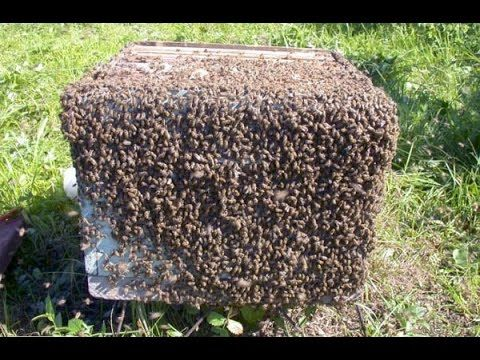 Видеокурс По Пчеловодству