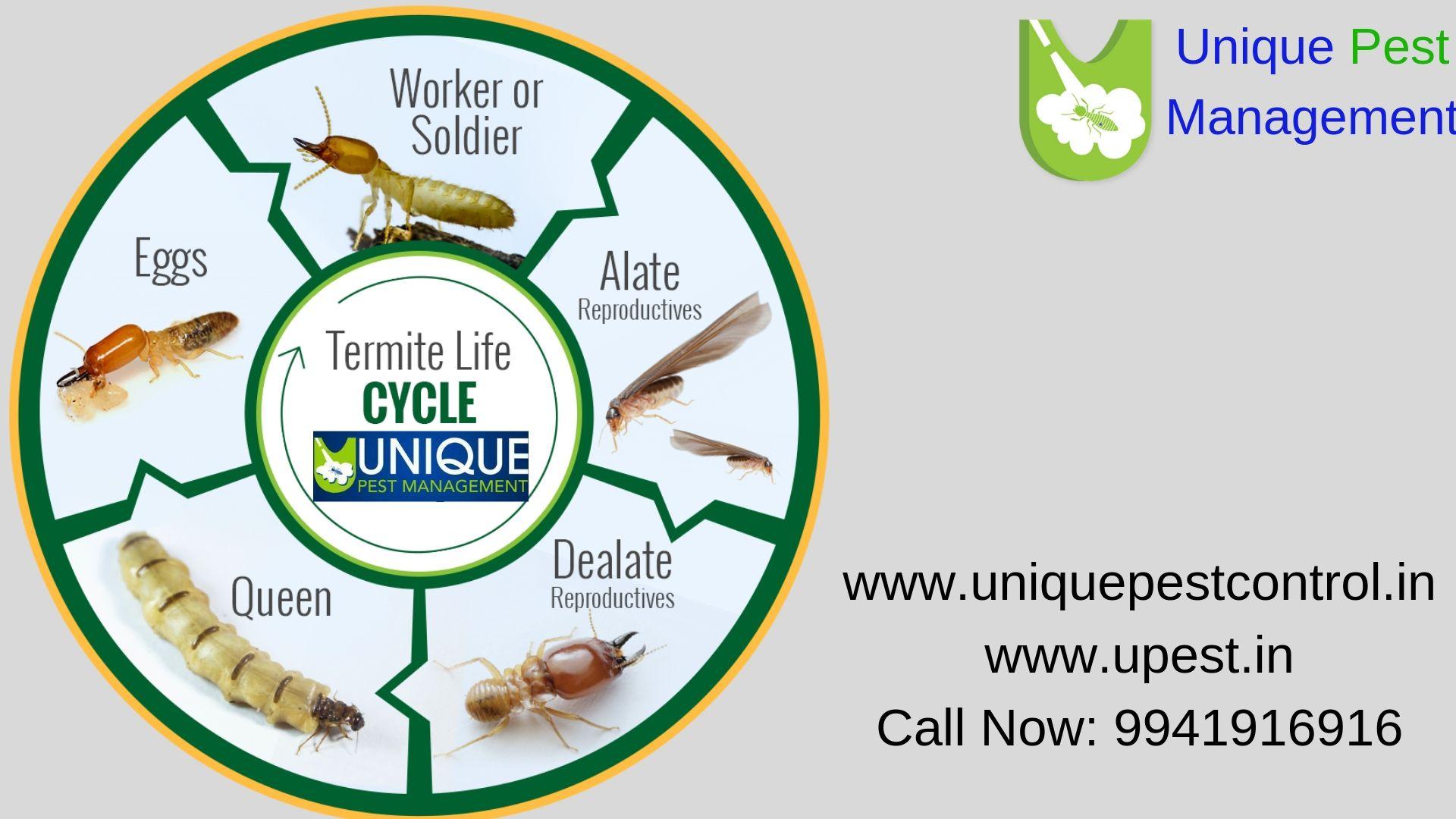 https//uniquepestcontrol.in/contactus/ Pest control