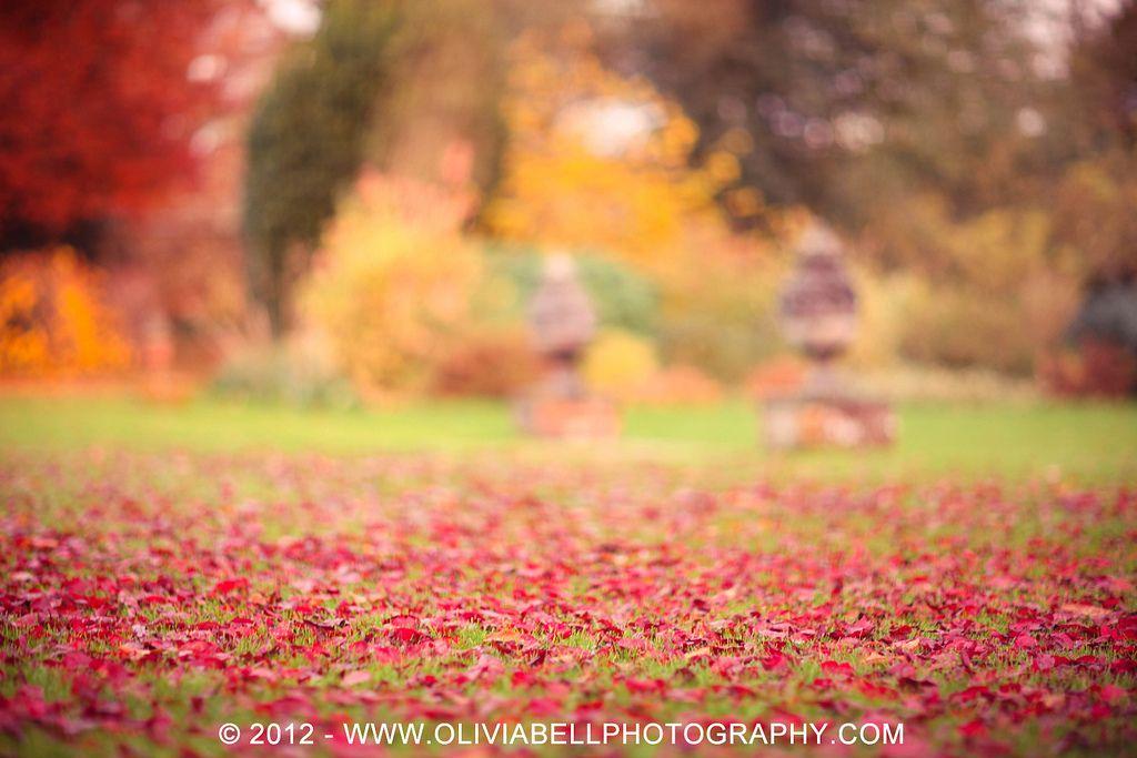 A Carpet of Autumn L