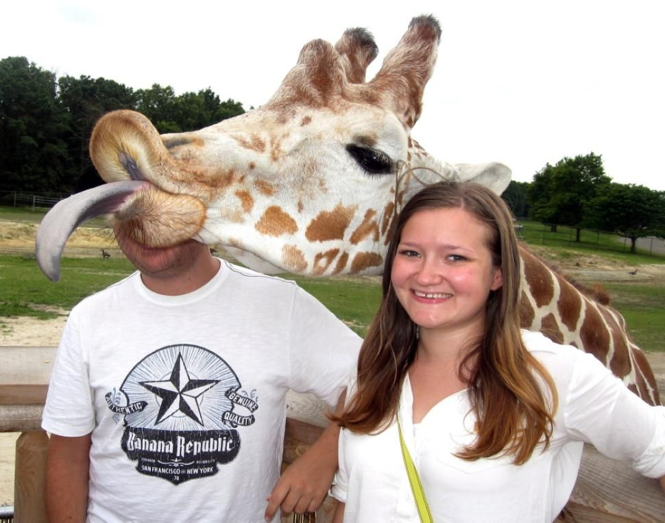 This couple was just trying to have a fun day at Six Flags Great Adventure when a gutsy giraffe decided to stick his neck out and mess with everything. Needless to say, it's a Kodak moment these two won't soon forget.