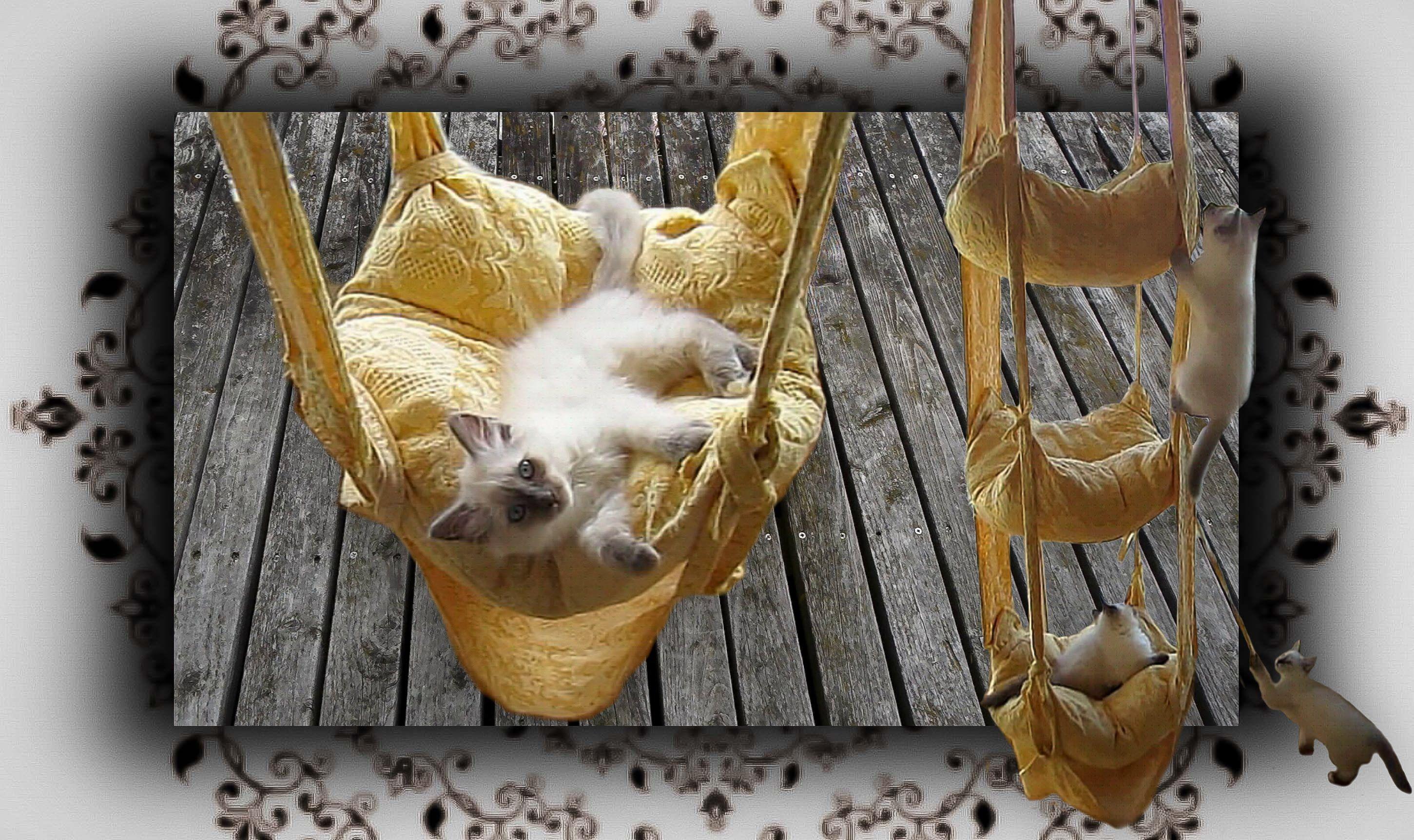 diy h ngekissen schaukel f r katzen handmade cats trapeze pets kids and toys for them