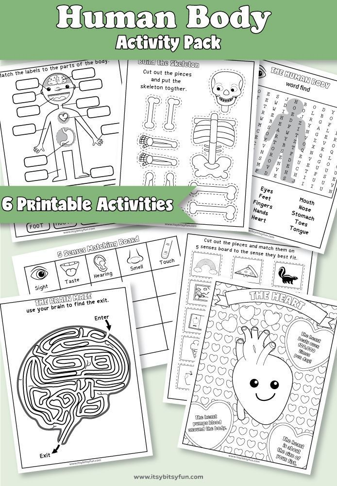 Human Body Worksheets Little Minds Science Human body