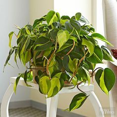 House Plant For Dark Room on house plants for stairs, house plants for bathrooms, house plants for hallways, plants for low light rooms, plants that like dark rooms, house plants for offices,