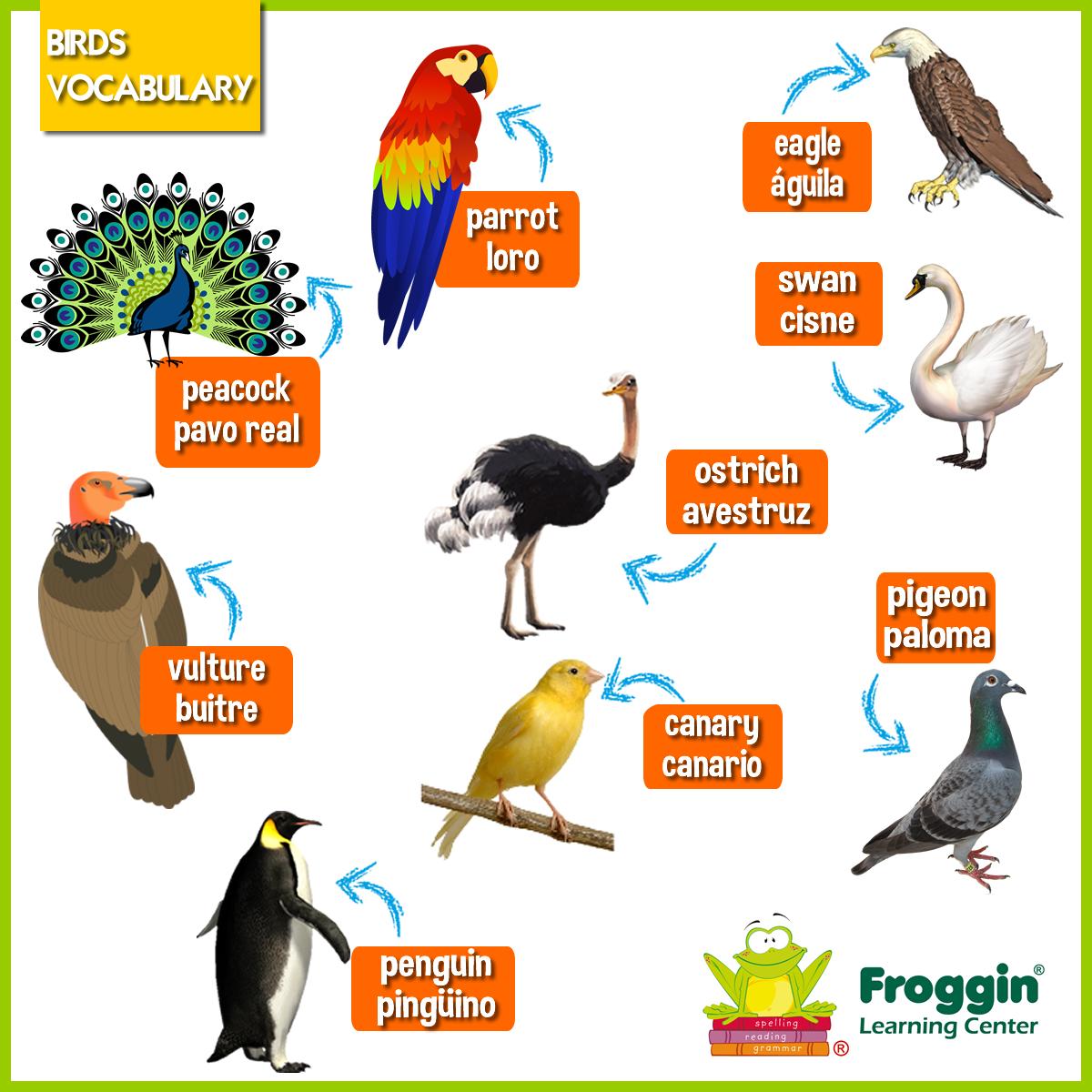 Birds Vocabulary Oggin