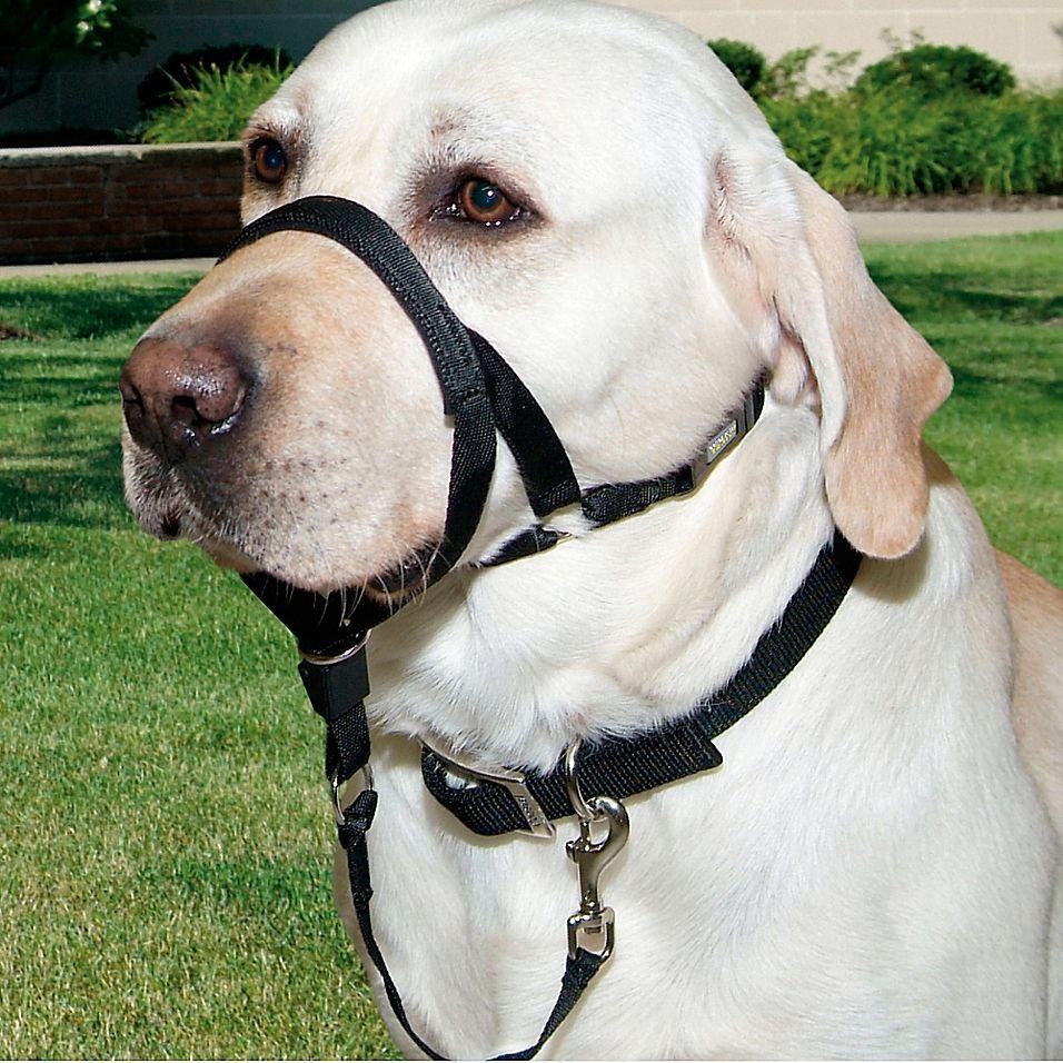Abundant dog collar nylons doggies militarydogtraining