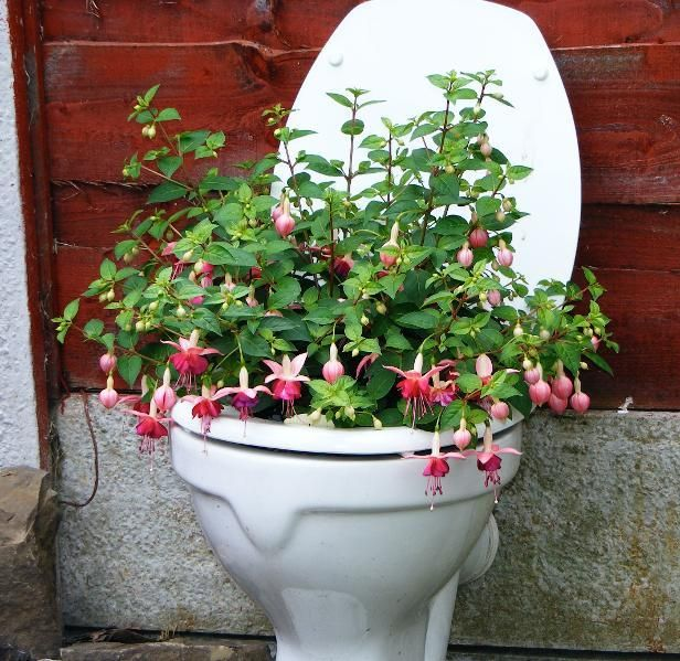 Recycled Plant Pots: Recycled Toilet-- I Am All For Recycling, But Why Would I