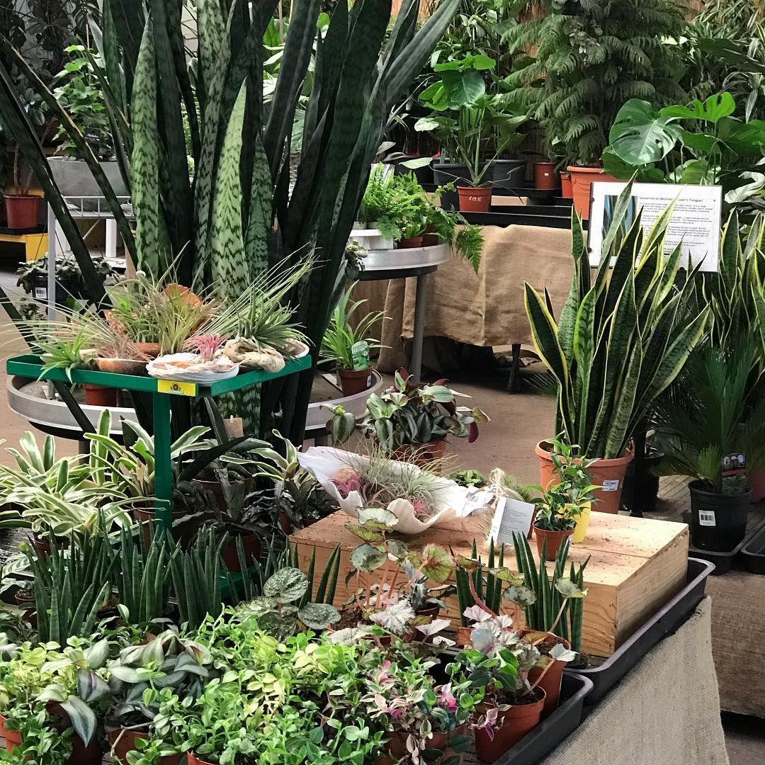 Indoor Plants Urban Plant Life Garden Centre Dublin Indoor