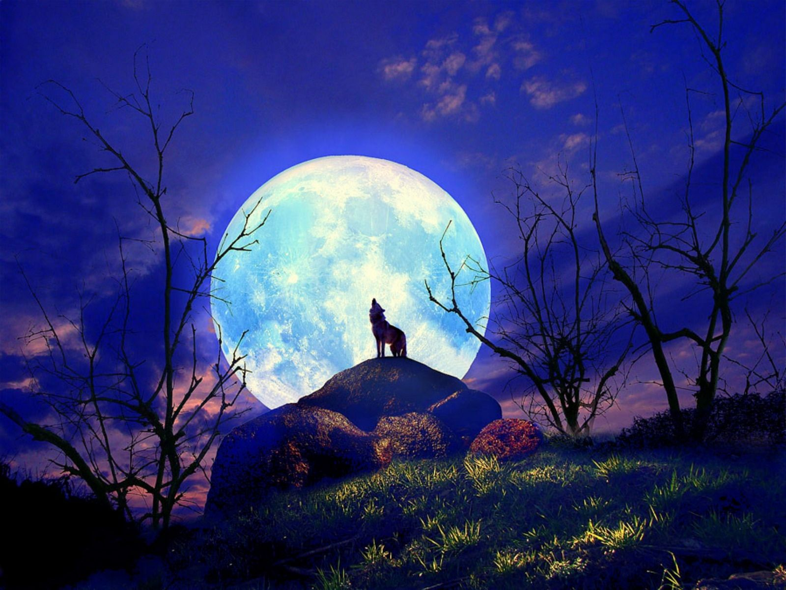 Full Moon Cat Wallpapers | HD Wallpapers