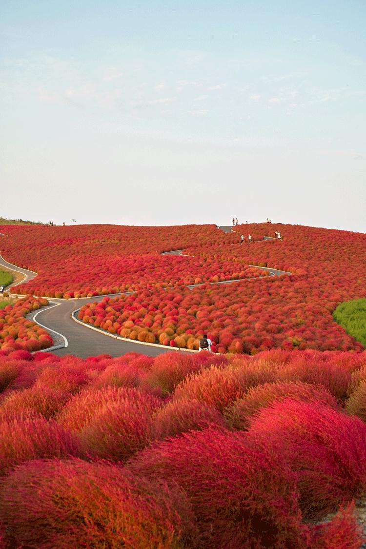 أجمل 10 صور مناظر طبيعية من حول العالم لم تتصو روا أنها موجودة Breathtaking Places Seaside Park Hitachi Seaside Park