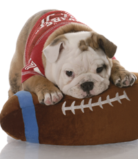 I am not a football fan, but this is so adorable :)