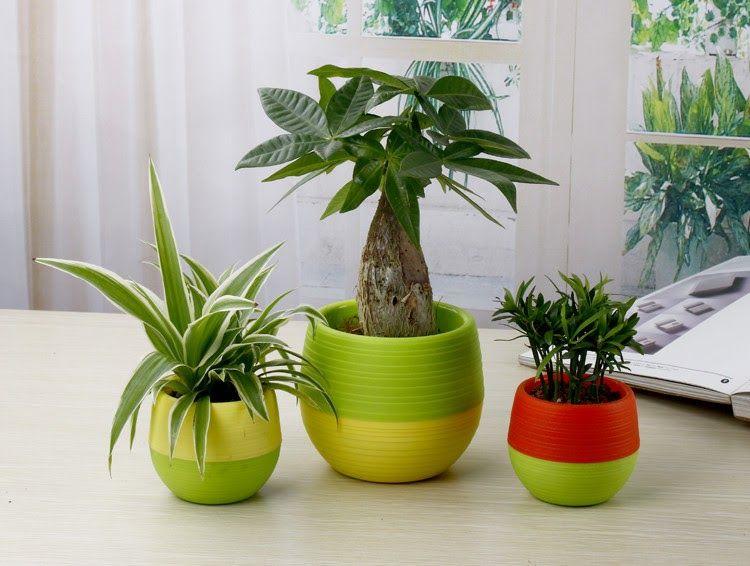 Gambar Bunga Dalam Pot Kecil Mini Pot Bunga Hias Kaktus Tanaman 5 Pcs Multi Color Vas Bunga Plastik Aneka Hiasan Meja Gambar Bunga Menanam Bunga Pot Bunga