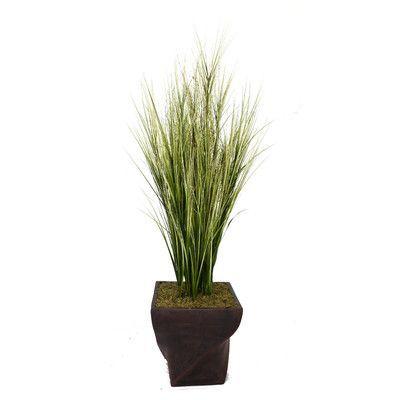 Laura Ashley Home Tall Onion Grass in Fiberstone Planter