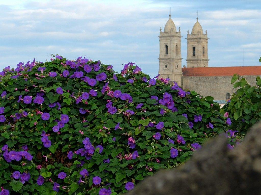 Végétation sur ruines, et vue sur l'église de Lapa (Igreja da lapa)