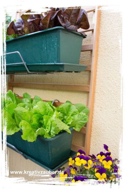 salat pflanzen garantiert schneckenfrei garten salat. Black Bedroom Furniture Sets. Home Design Ideas