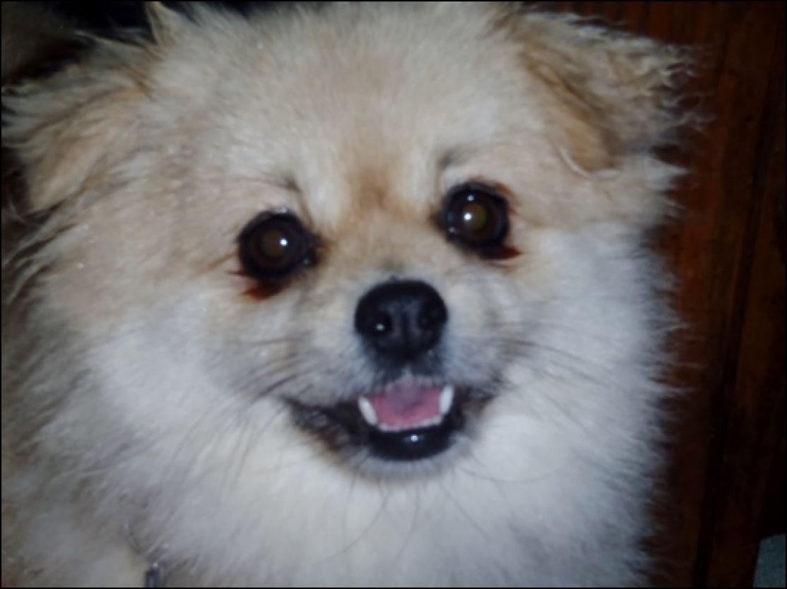 Pin by Angie Ingalsbe on Eyes Opened Dog crying, Dogs